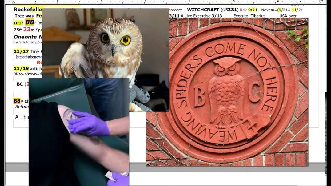 A Little Owl 11/17 -  88th Rockefeller 23m X-Mas Tree - Sorcery signs of the NWO Rising!