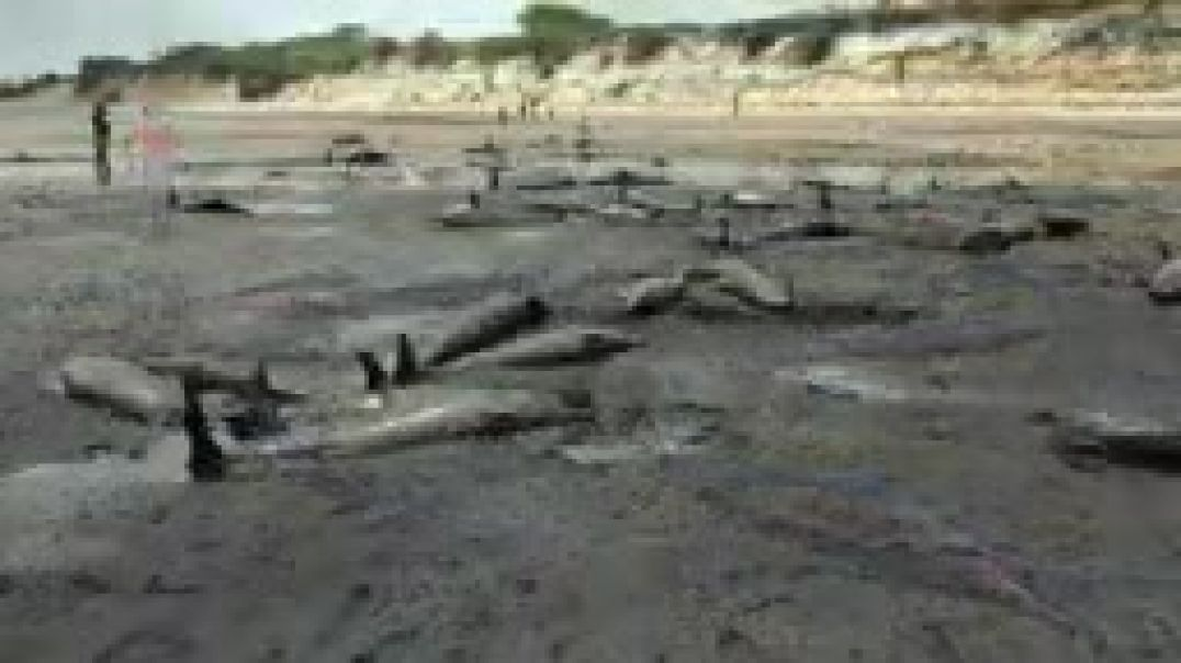 Hundreds of dolphins found dead on Mozambique beach