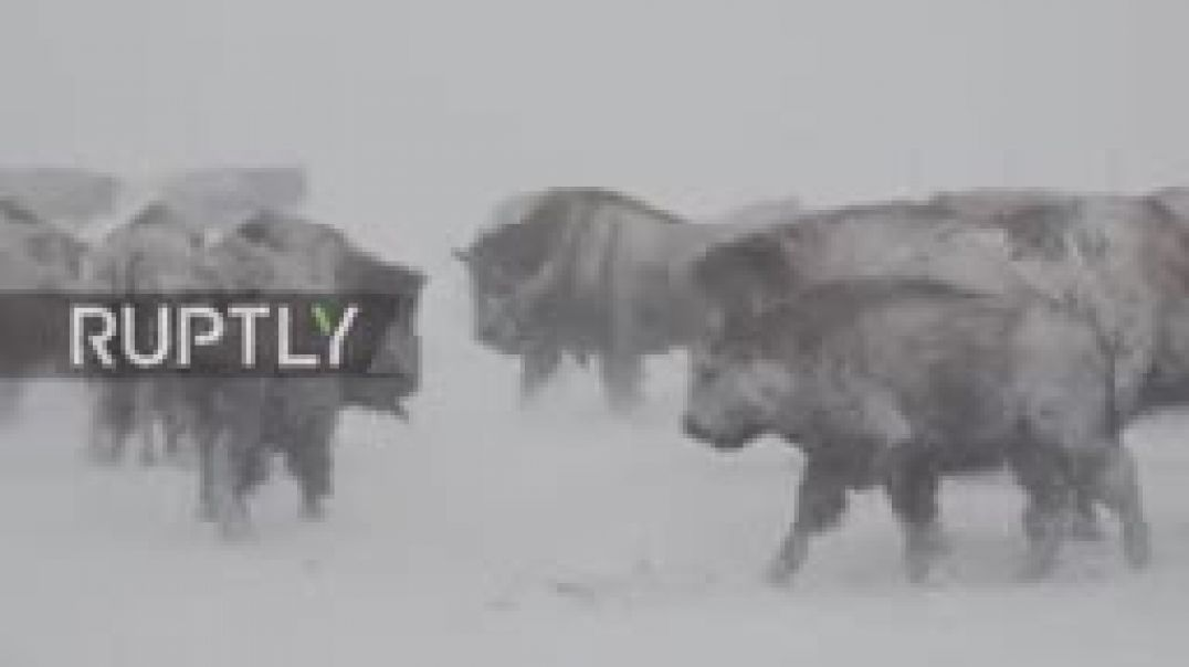 USA- 'Not struggling, skiing' - Wyoming locals make the best of winter storm_144p