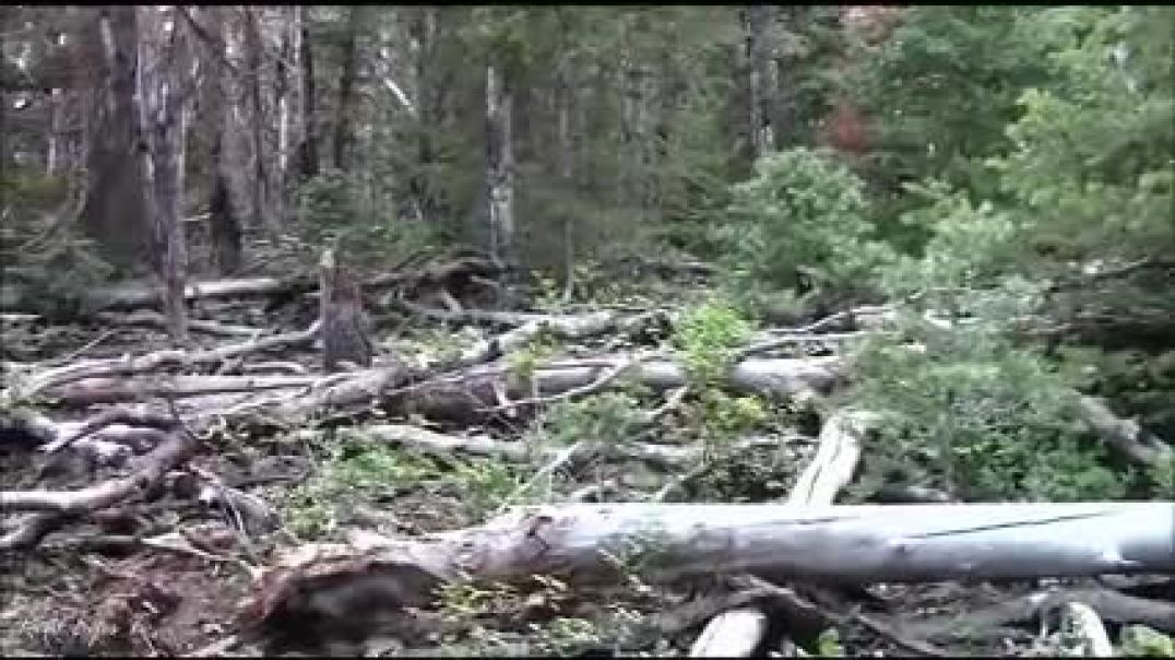 BIGFOOT CAUGHT ON VIDEO!! - Brave Man Comes Across Sasquatch Watching Him On Camera!!