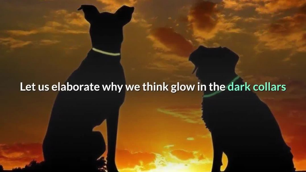 the Dark Dog Collars for your dog
