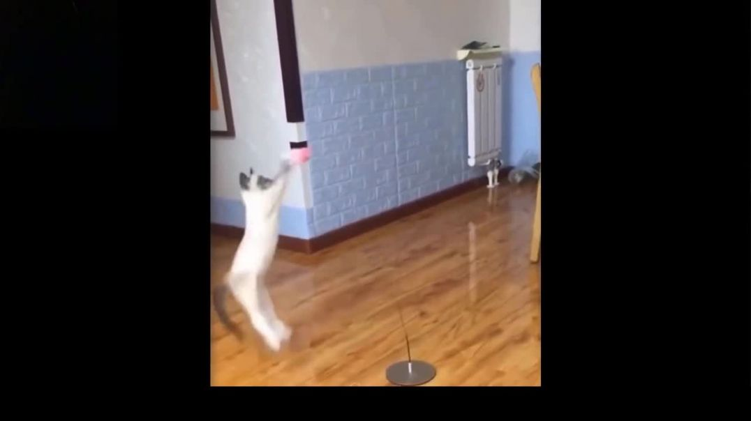 Excited Cat Jumping In The Air To Play With A Ball. MUST WATCH. VERY FUNNY !