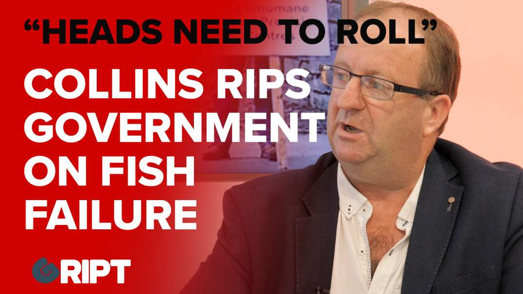 """""""Heads must roll"""" - Michael Collins TD rips government on fish failure"""