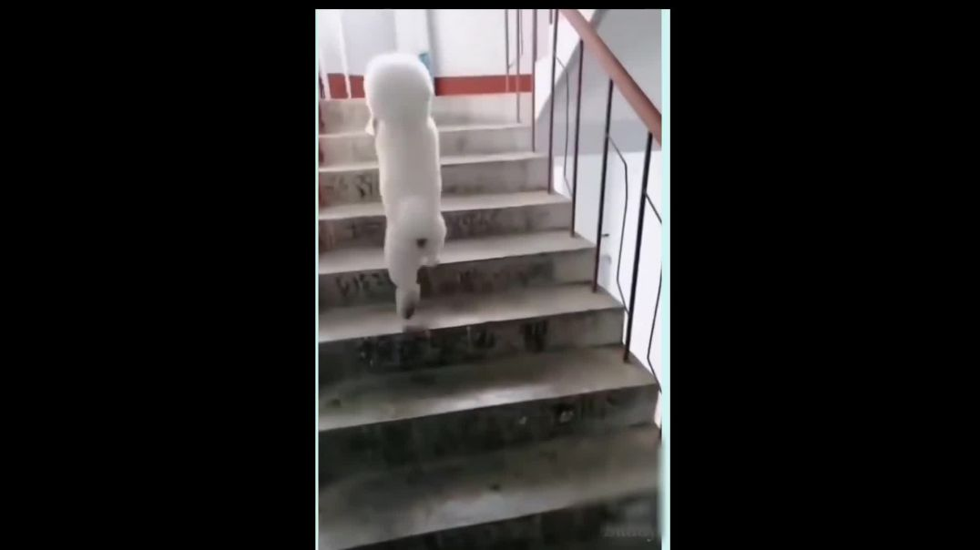 Dog Going Up The Stairs On 2 Feet ! Really CUTE and AWESOME.