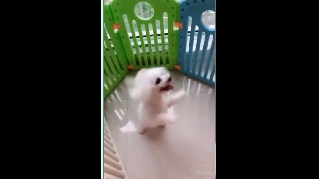 Dog Jumping and Dancing To FAST Music. Really Awesome.