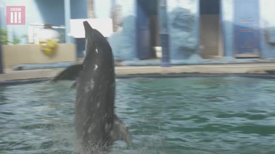 Animal Exploitation Uncovered - Indonesias Dolphin Circuses