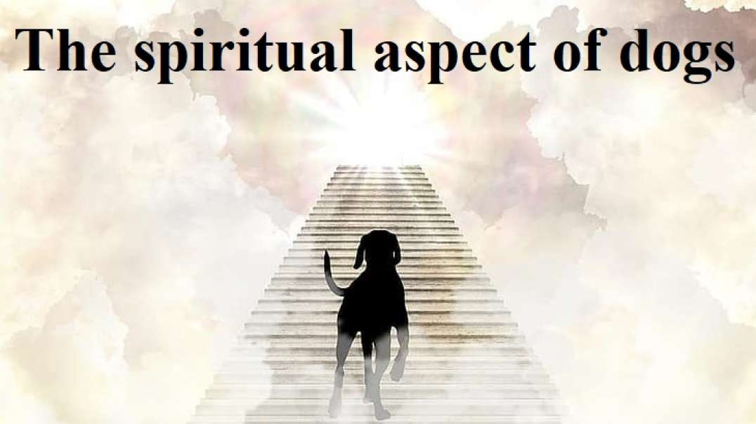 The spiritual aspect of dogs. (When The Spirit Takes Over)