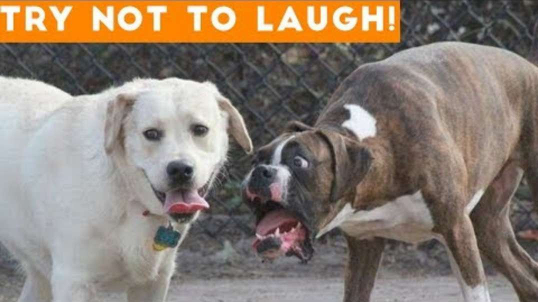 Try Not To Laugh At This Ultimate Funny Dog Video Compilation