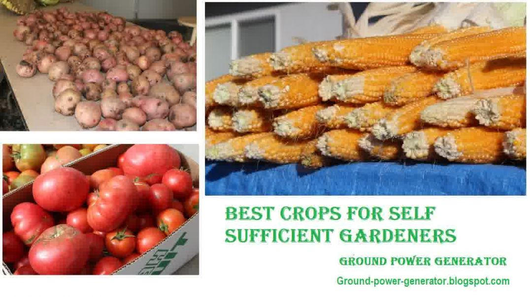 Best Staple Crops for Building Food Self-Sufficiency