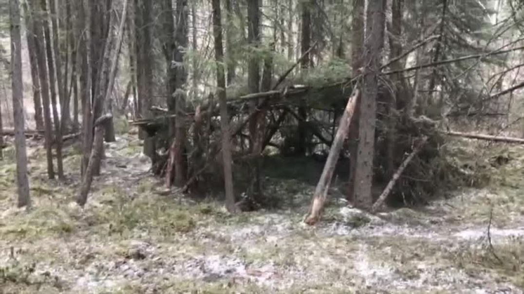 Trail Camera Records Video Of Bigfoot Near Shelter In The Woods