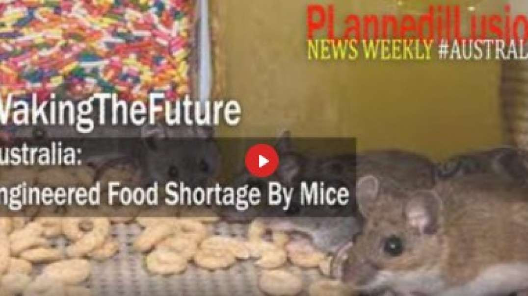Mirrored From PLannedilLusion: NEWS WEEKLY WAKINGTHEFUTURE : ENGINEERED FOOD SHORTAGE BY MICE