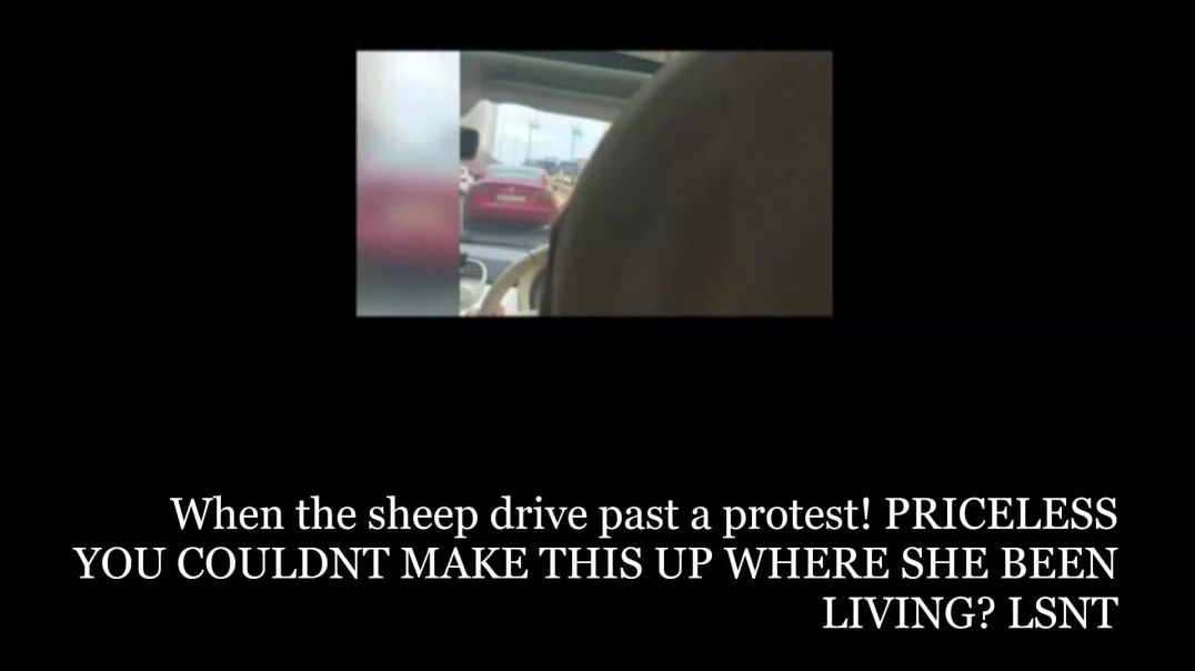 When A Car Of Sheeps Drive Past A protest PRICELESS living under a ROCK