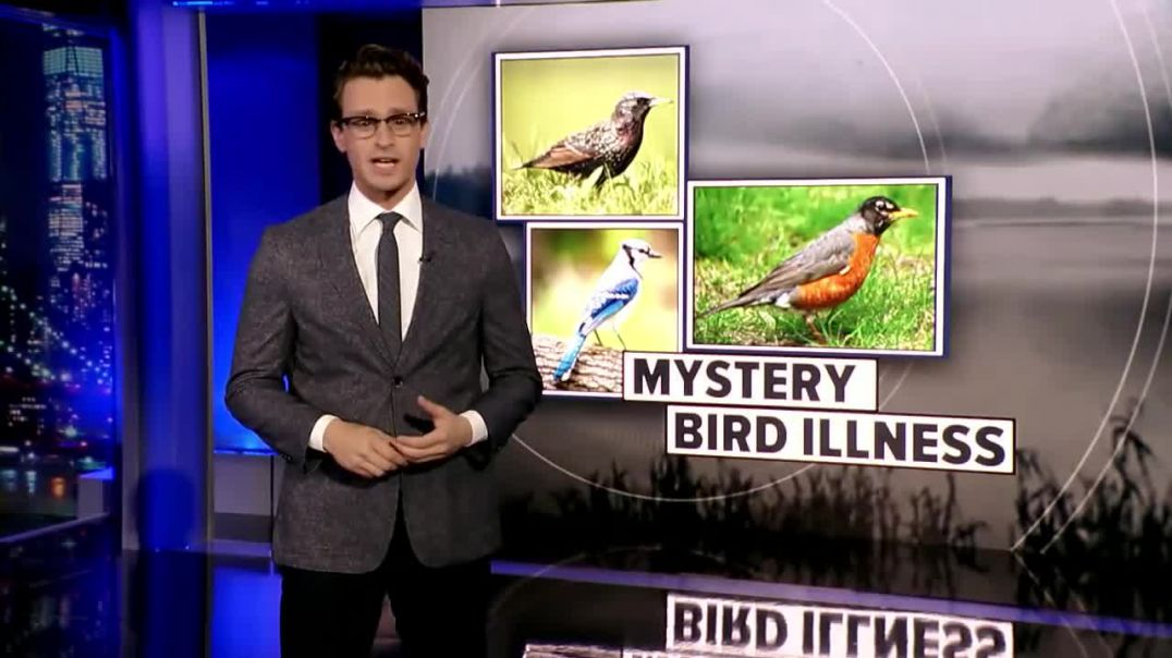 Mystery bird illness reported in at least 10 states ... 5G rural rollout?