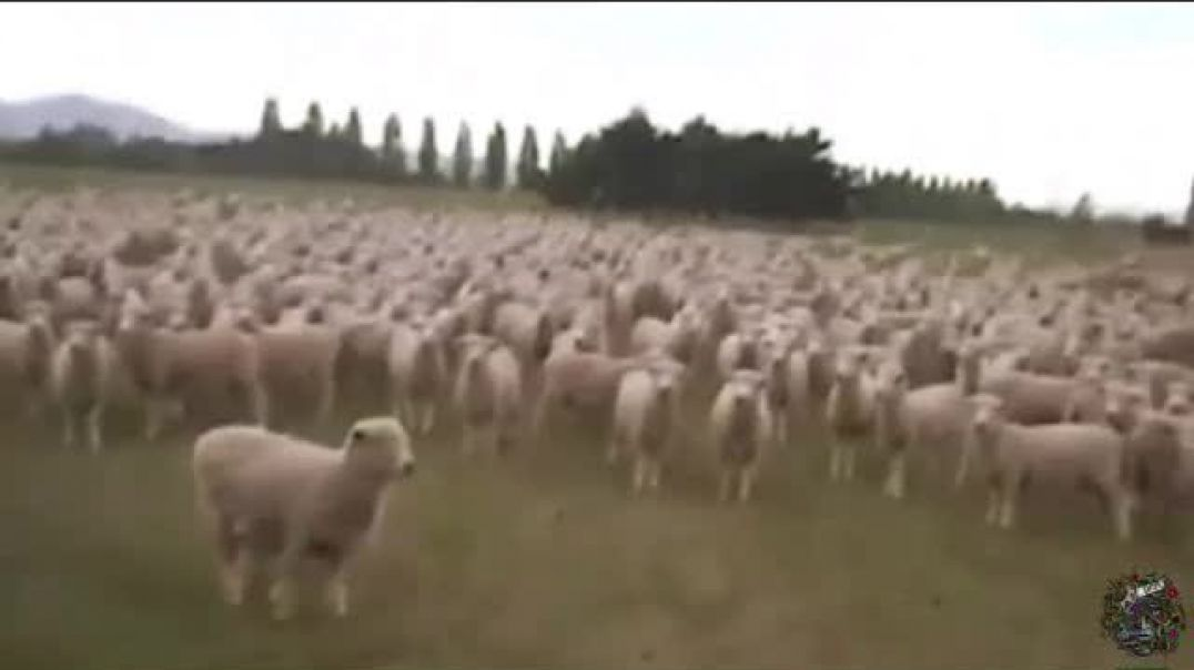 The sheep are responsible for this tyranny