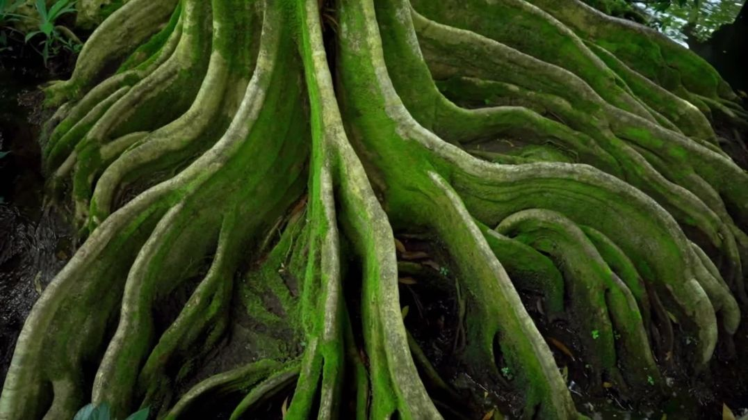 Will roots save the world?   DW Documentary