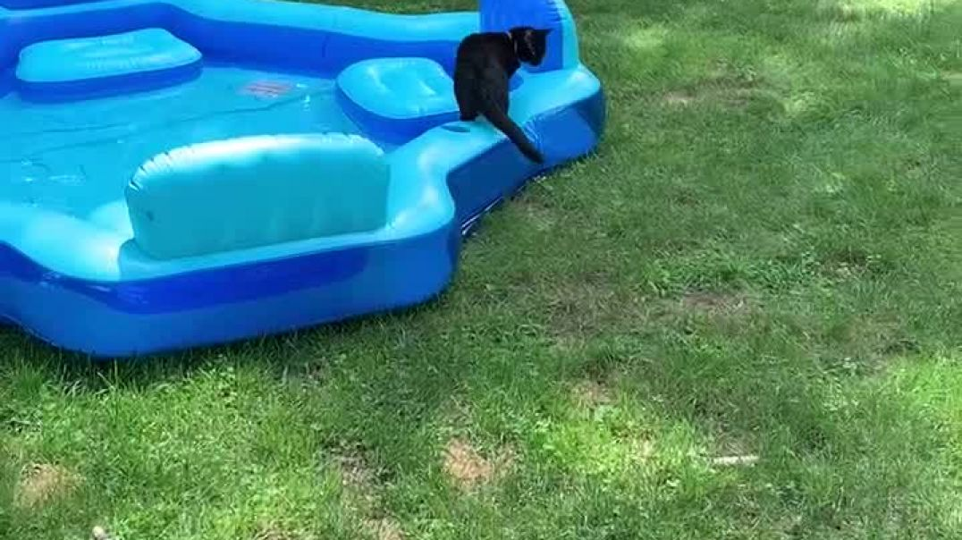 Madeline the cat and the pool