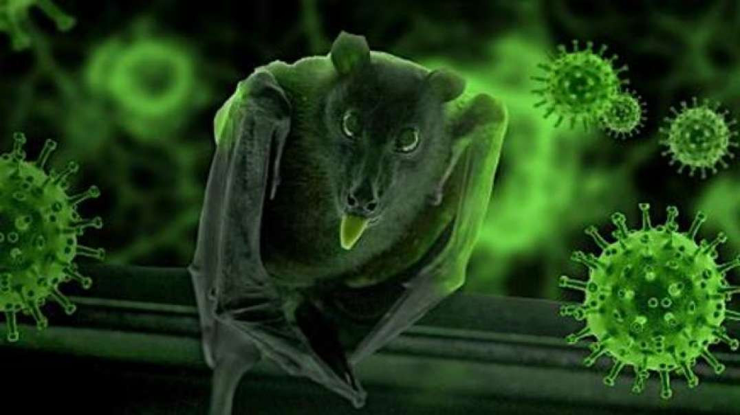 CCP and EchoHealth Planned to INFECT Bats with Chimeric SPIKE protein by Nanoparticle SPRAY for Gain