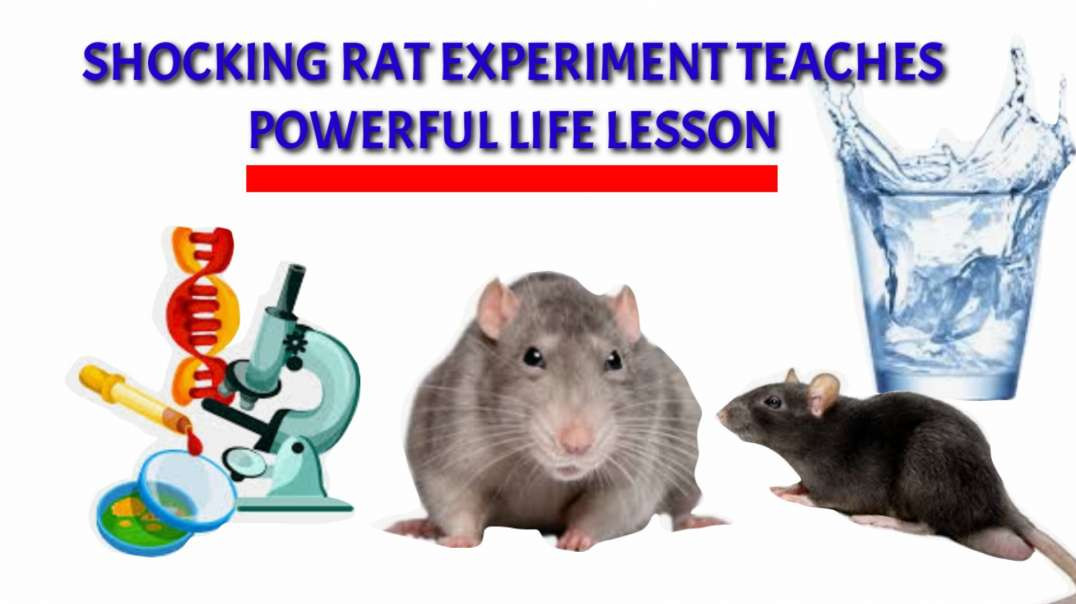 SHOCKING rat experiment TEACHES POWERFUL life lesson