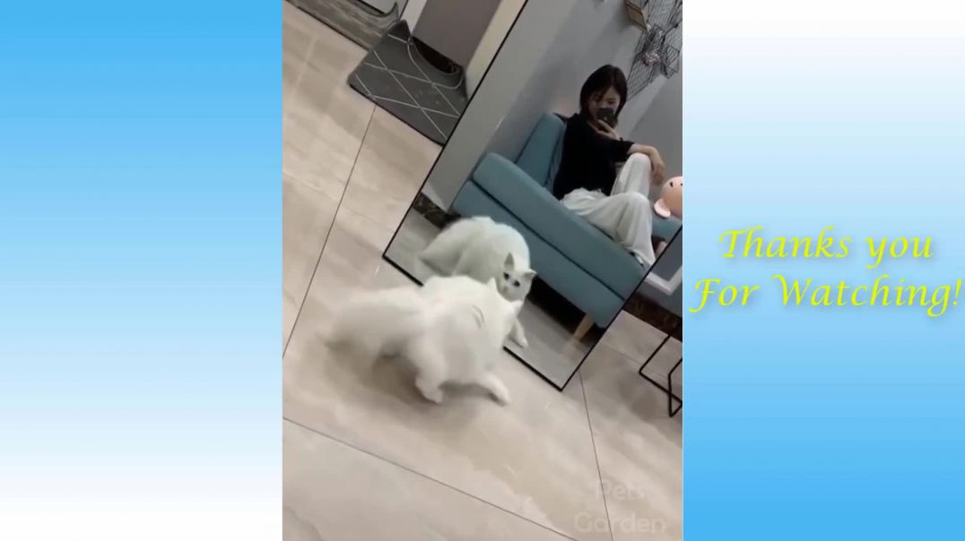 Cute And Funny Pets || Try Not To Laugh To These Pets Compilation