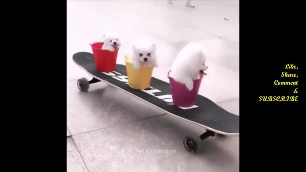Baby Dogs  Cute and Funny Dog Videos Compilation Aww Animals Funniest Animals Video 2021