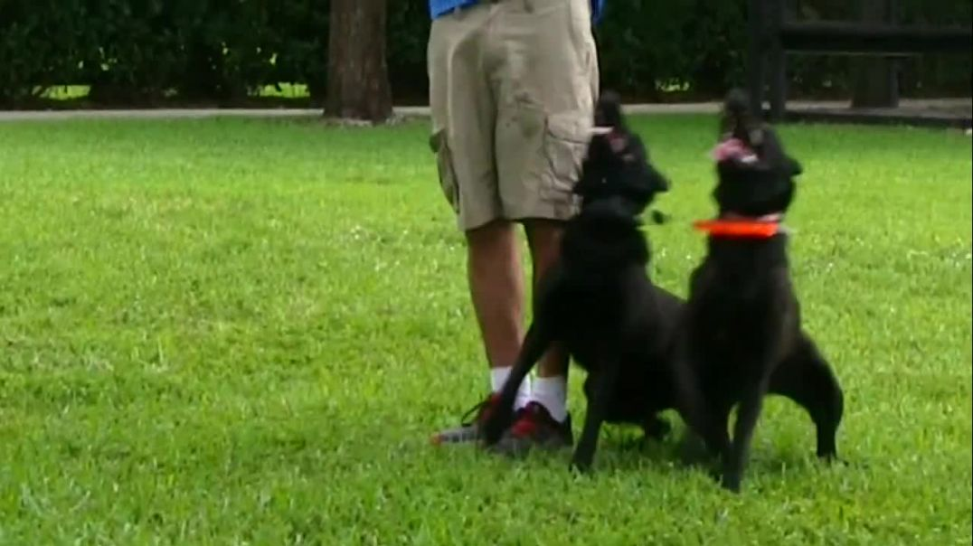 Behind the scene Footage at My Dog Trainer's Dog Training academy!