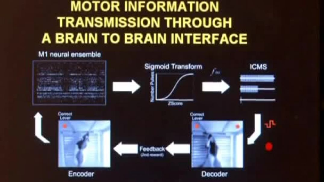 Rat brains linked to create biological computer Video Reuters