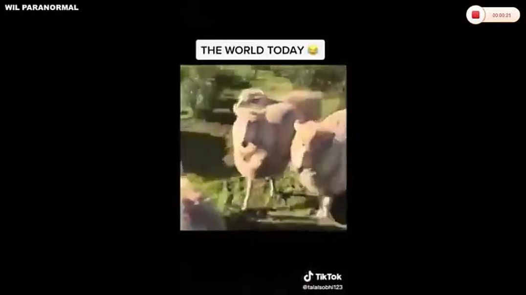 DUMB SHEEP rush to get their COVID SHOTS - just like the DUMB SHEEPLE IN REAL LIFE