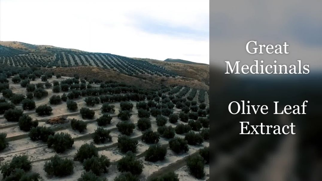 Great Medicinals - Olive Leaf Extract