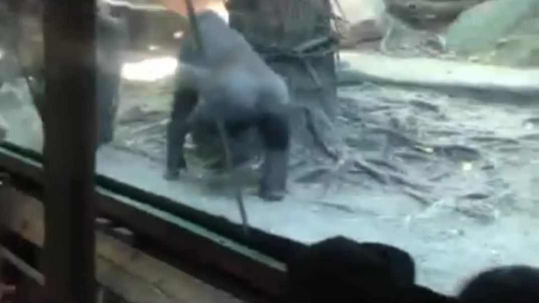 OMG Look What Happen at the Zoo, Cover Your Eyes kids