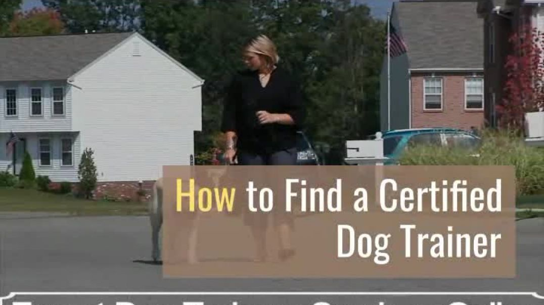 Stop your dog's uncontrollable behavior