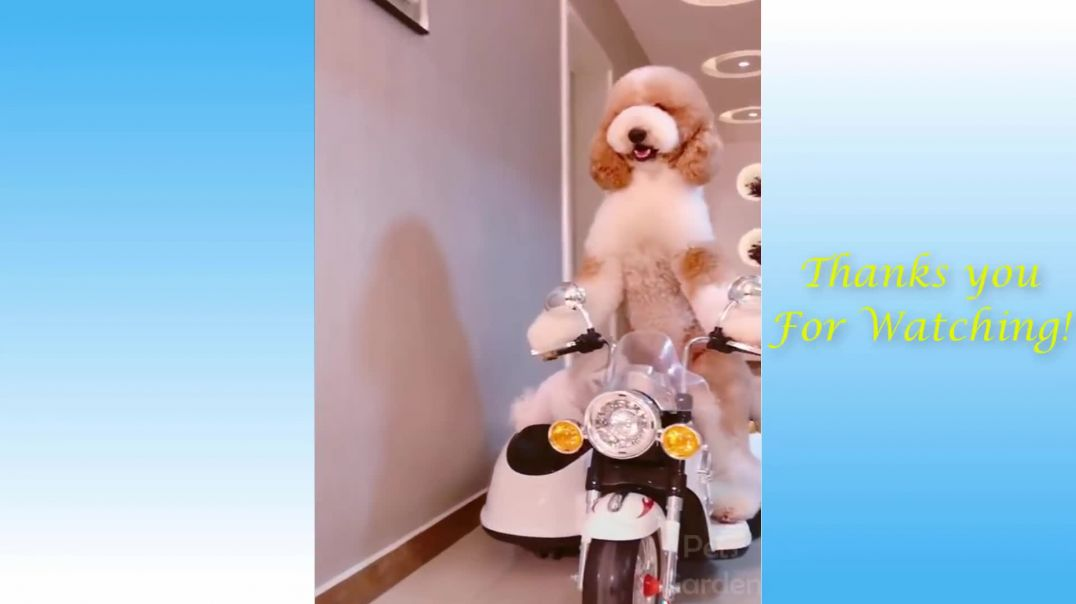 Cute and Funny Pets|| Try Not To Laugh To The Compilation