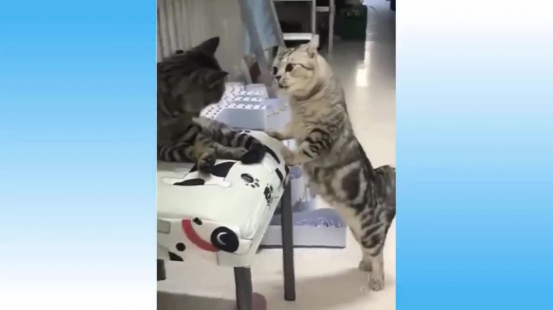 Top Funny Cat Videos - Try Not To Laugh