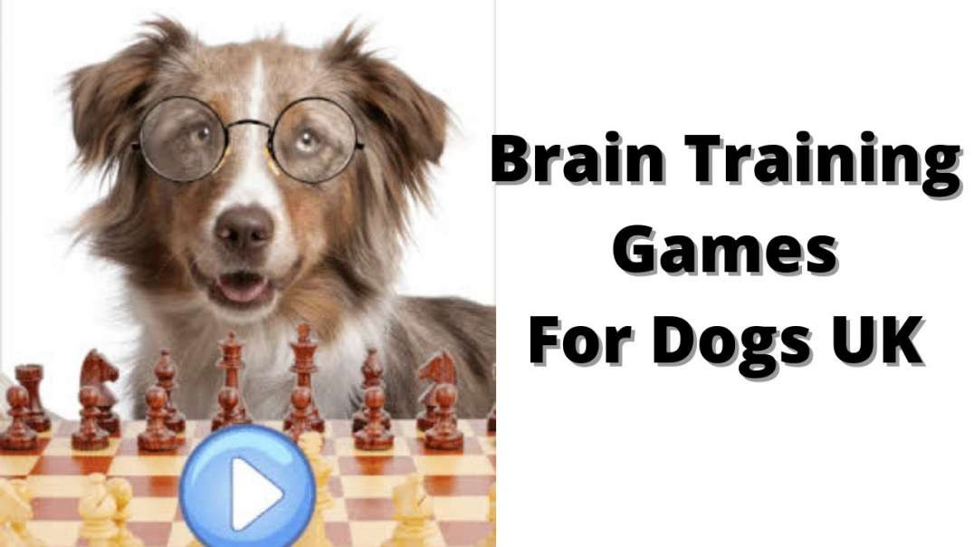 Brain Training Games For Dogs