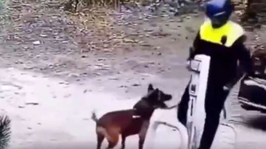 Police Dog Refuses To Attack Protesters, Attacks Police Instead